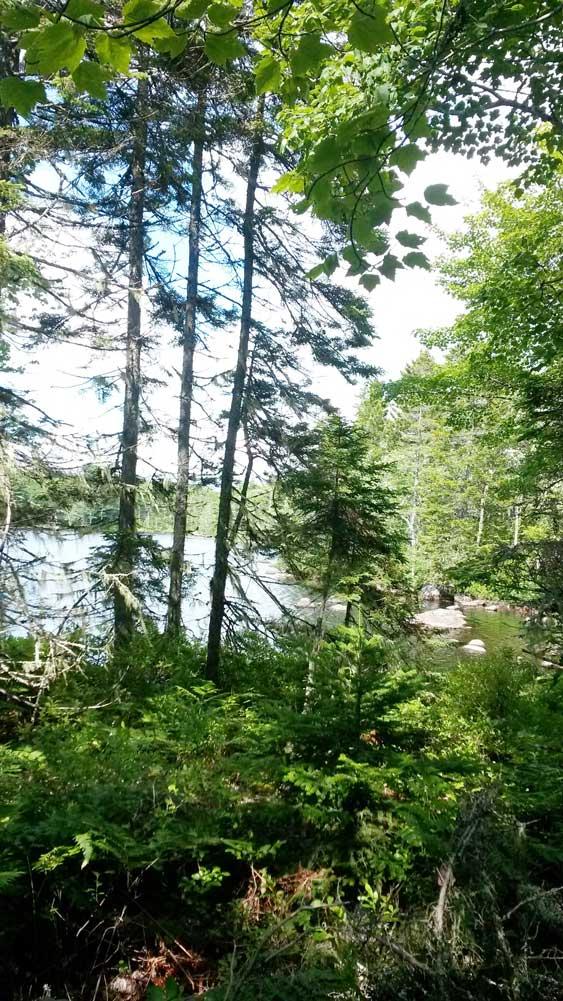 Leafy shoreline