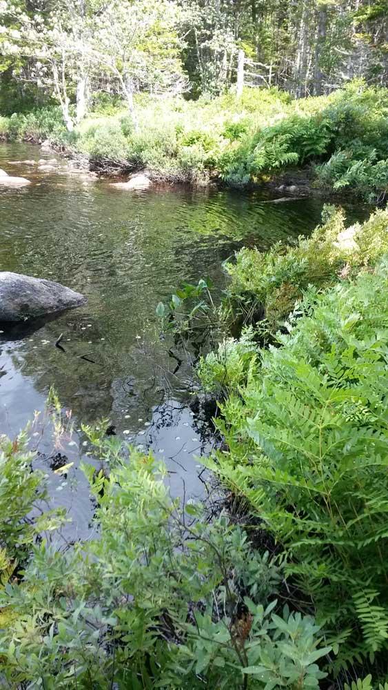 Fishing spot?